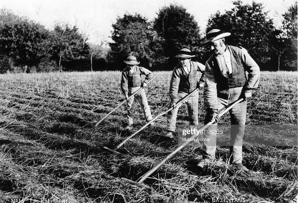 A farmer and his two sons raking hay in the fields  News