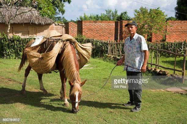 Farmer and horse carrying hessian sacks containing bananas Chorro de Maita near Guardalavaca Holguin Province Cuba