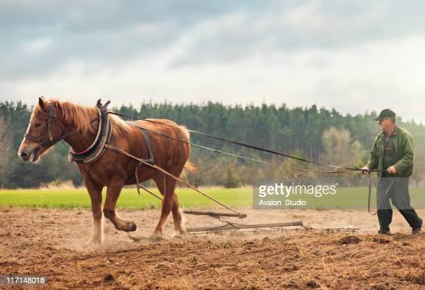 Agricultor e cavalo no campo de trabalho