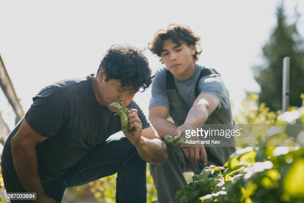 farmer and son inspect crops - genderblend stock pictures, royalty-free photos & images