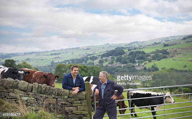 Farmer and son leaning on stone wall and discussing cattle in field