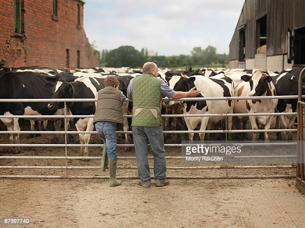 Farmer And Son Looking at Cows