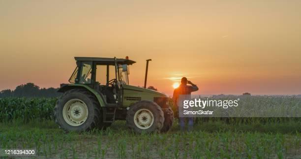 日没時のトウモロコシ畑の農家とトラクター - トラクター ストックフォトと画像