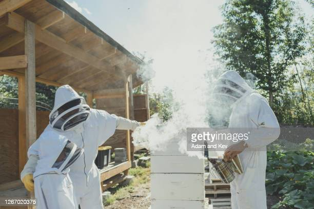 Farmer and two sons work with bee hive