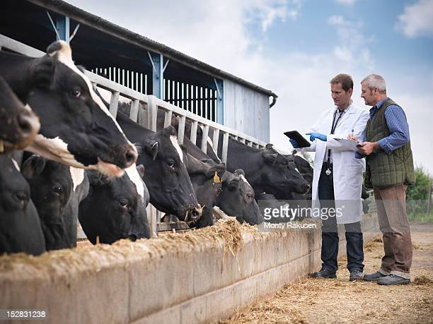 Farmer and vet inspecting cows feeding from trough on dairy farm