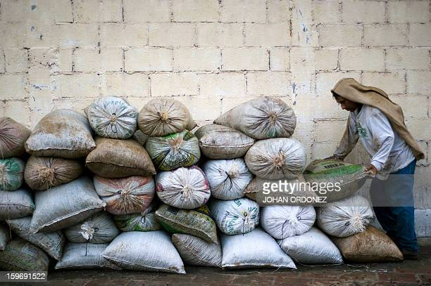 A farmer arranges sacks with coffee beans at San Victor farm in Los Verdes village Fraijanes municipality 35 km of Guatemala City on January 17 2013...