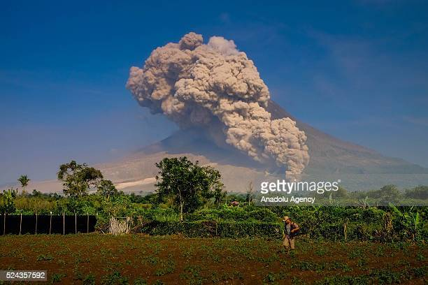 A farmer at his field as Mount Sinabung spews pyroclastic flows from the creater in Tiga Kicat village of Karo district North Sumatra Indonesia on...