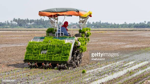 farmer at paddy fields - shaifulzamri stock pictures, royalty-free photos & images