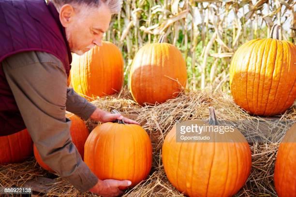 Farmer at pumpkin farm