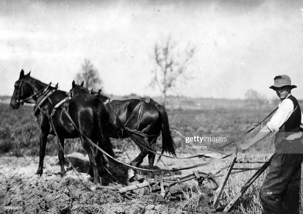 Farmer behind horses as they pull a plow through a field