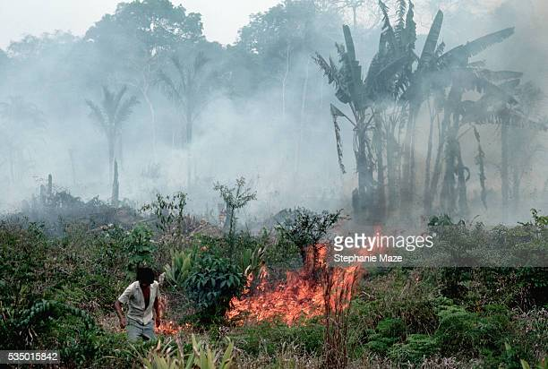 farmer burning plants in rainforest - amazon rainforest burning stock pictures, royalty-free photos & images