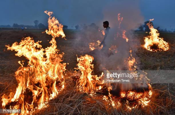 A farmer burns paddy stubble at Chismani village in Ganaur city on October 31 2019 on the outskirts of Sonipat India