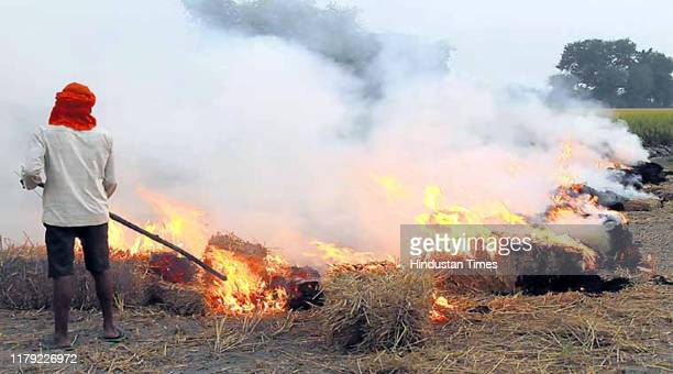 A farmer burns paddy stubble in a village near Bathinda India on Thursday October 31 2019