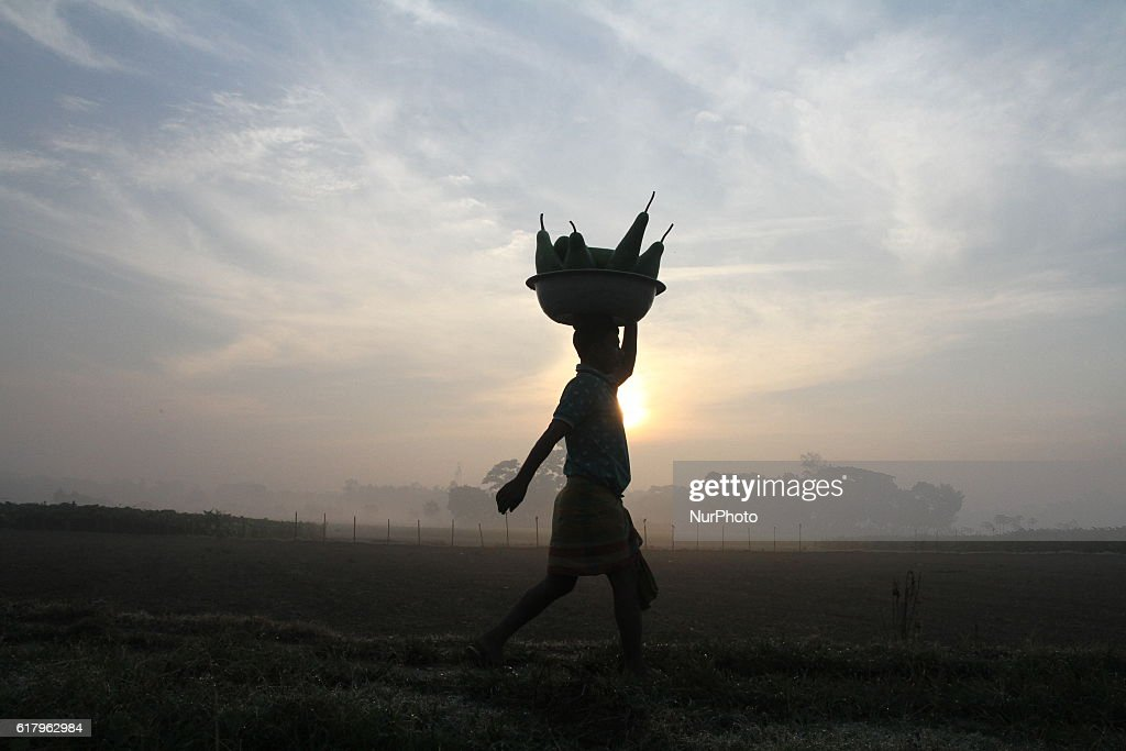 A farmer carries vegetables on his head to sell them at a market outside of Dhaka, Bangladesh on October 25, 2016. Vegetable production is contributing to the nutrition strategy of Bangladesh. Average agriculture sector GDP annual growth reached 3.5 per cent.