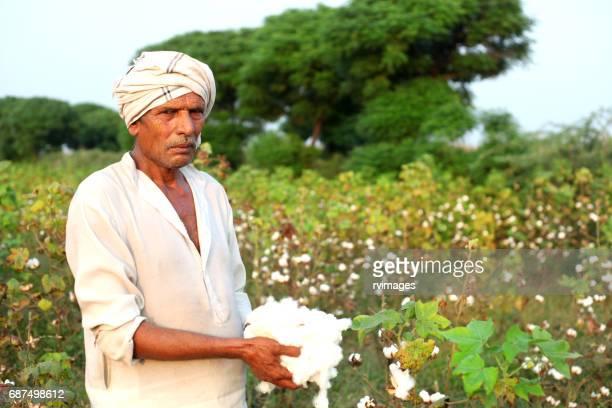 Landwirt mit Baumwolle