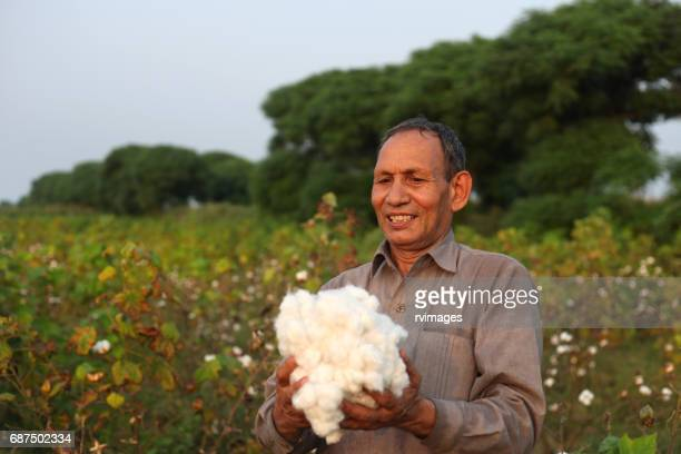 farmer carrying fresh cotton - cotton harvest stock pictures, royalty-free photos & images