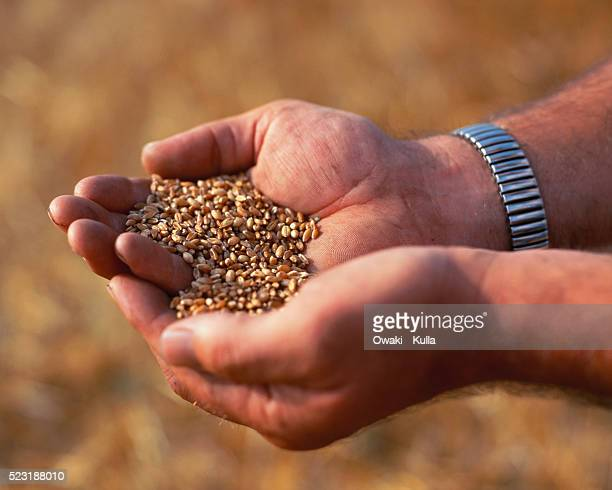Farmer Carrying Handful of Seeds
