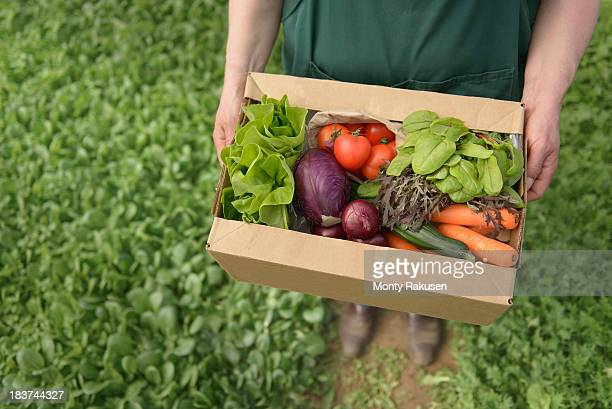 farmer carrying organic vegetables in box for delivery, close up - tadcaster stock photos and pictures