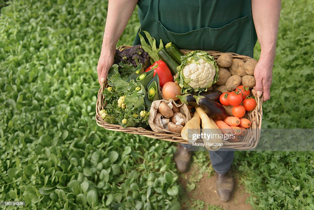 Farmer carrying organic vegetables in box for delivery, close up : Stock Photo