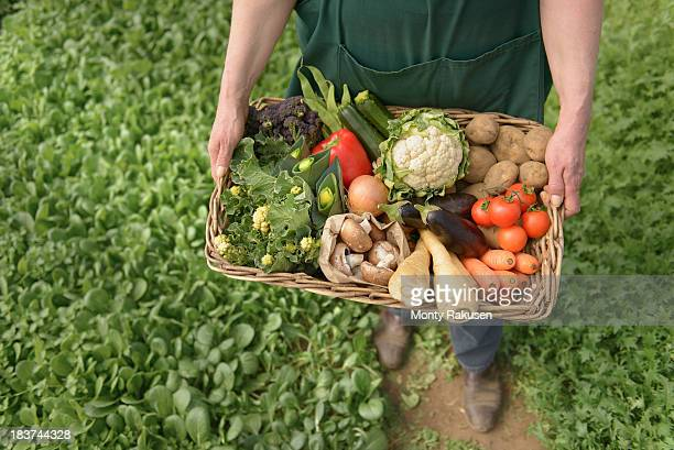 farmer carrying organic vegetables in box for delivery, close up - organic farm stock pictures, royalty-free photos & images