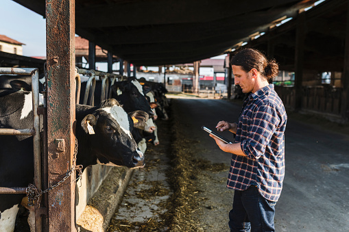 Farmer checking dairy farm mobile app - gettyimageskorea