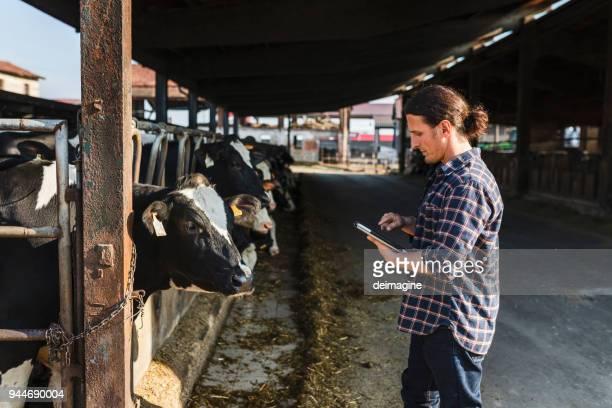 landwirt überprüfung milchviehbetrieb mobile app - mann beim melken stock-fotos und bilder