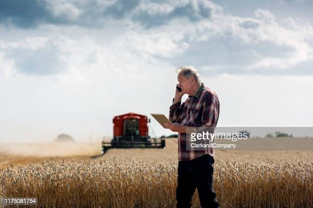 farmer checking his wheat field. - grain harvest stock pictures, royalty-free photos & images