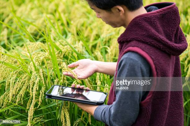 a farmer collecting agricultural data with a digital tablet in a rice crop - responsible business stock photos and pictures