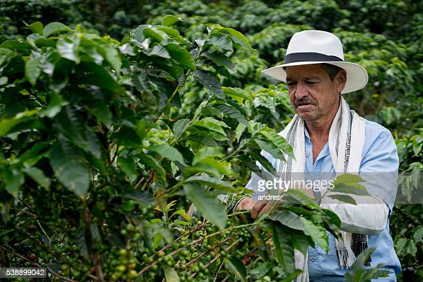 Farmer collecting coffee beans at a farm