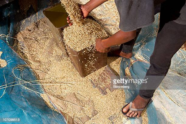A farmer collects rice from a machine used to separate the rice grain from the stalk in Surin Thailand on Monday Nov 22 2010 Thailand the world's...