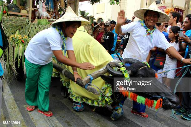 Farmer command his trained carabao to kneel down in front of San Isidro Labrador church to give respect and thankful for the bountiful harvest during...
