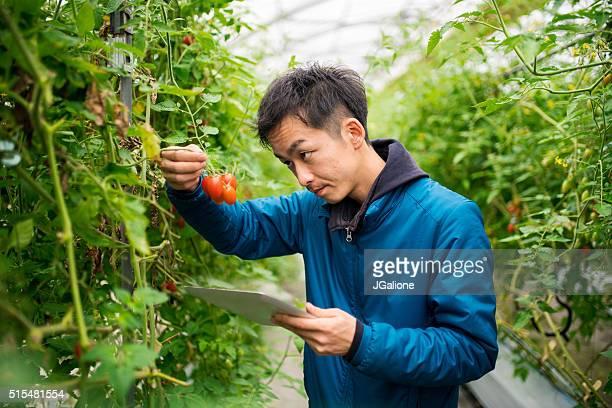農家を使用して研究を行うデジタルタブレットの温室
