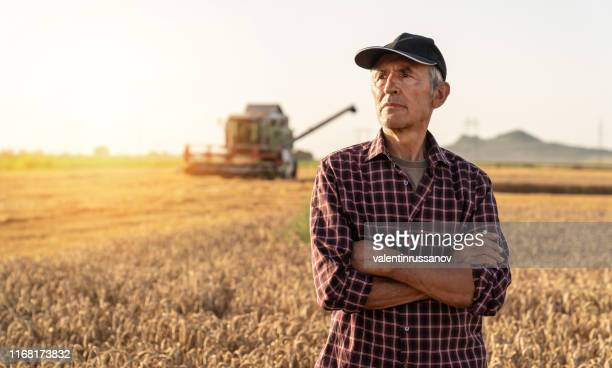 farmer controlled harvest in his field stock photo - wheat stock pictures, royalty-free photos & images