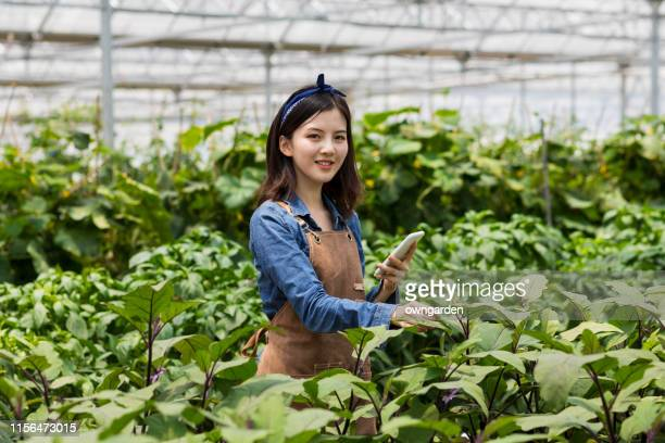 farmer controlling vegetables in greenhouse - agronomist stock pictures, royalty-free photos & images