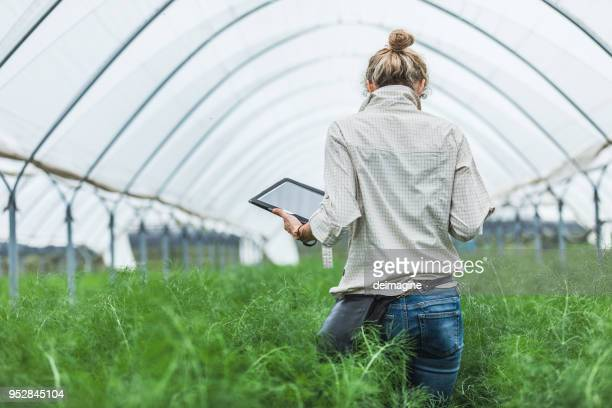 Farmer controlling vegetables in greenhouse