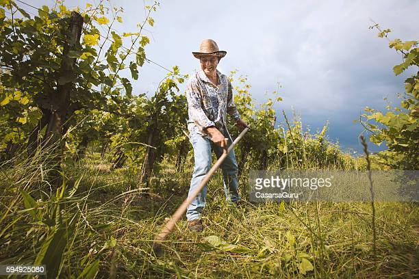 farmer cutting grass - scythe stock photos and pictures