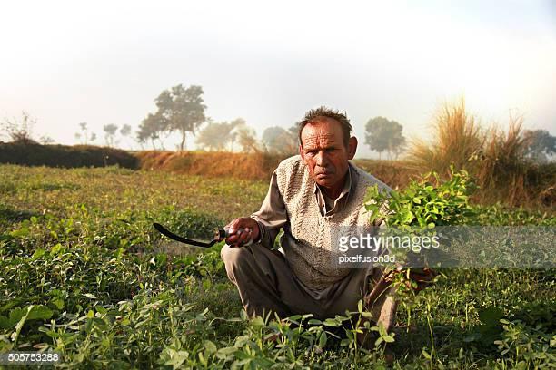 Farmer Schneiden grüne Gras Verwendung als tierischen