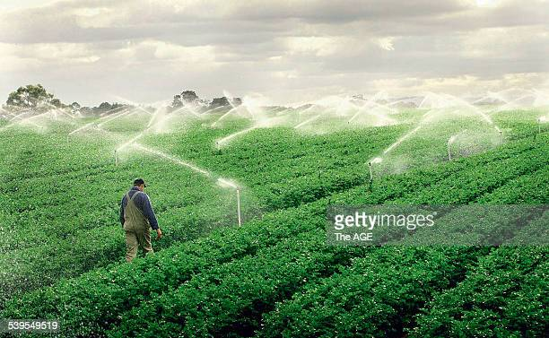 Farmer Darren Corrigan at his farm in Clyde with the irrigation turned on using recycled water 31 May 2005 The AGE Picture by EDDIE JIM