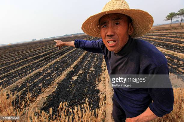 Farmer describes the fire situation in the distance on June 9, 2015 in Anyang, Henan province of China. Wheat fields caught fire in most parts of...