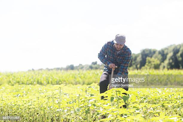 farmer digging plant crops - sigrid gombert photos et images de collection