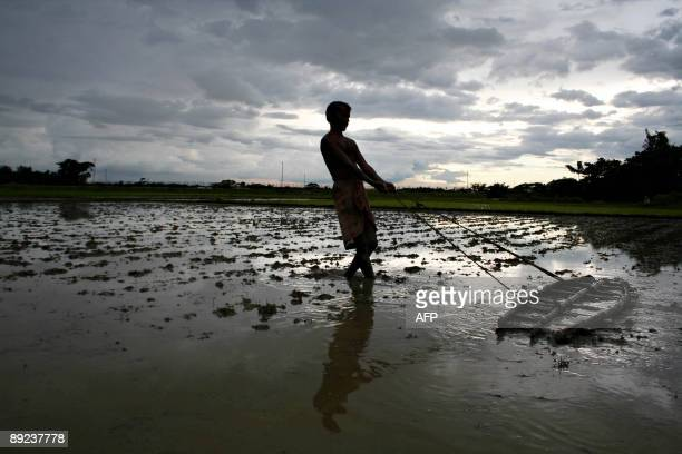 A farmer drags a bamboo plank to level soil on a paddy field against the backdrop of monsoon clouds at Shanmura in the outskirts of Agartala capital...