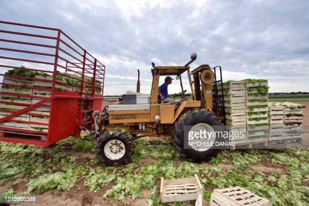 Farmer drives a truck carrying lettuces on August 5, 2009 near Douvres-la-Delivrande, outside Caen, northwestern France. French producers of fruits...