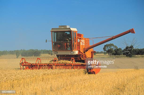 Farmer Driving Combine in Wheat Field