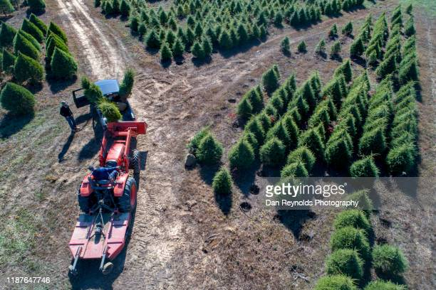 farmer driving red tractor - tree farm stock pictures, royalty-free photos & images