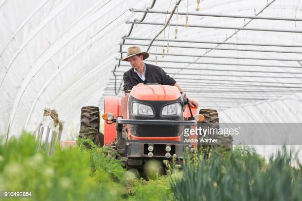 Farmer driving tractor in polytunnel