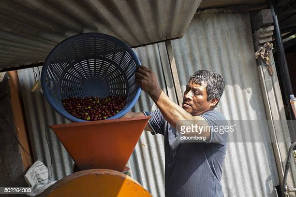 Farmer Eduardo Hernandez pours coffee cherries into a machine that separates the pulp from the beans at his home in San Miguel Escobar Guatemala on...