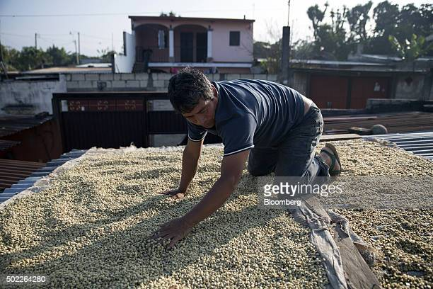 Farmer Eduardo Hernandez spreads coffee beans to dry on the roof of his home San Miguel Escobar Guatemala on Thursday Dec 17 2015 Coffee exports rose...