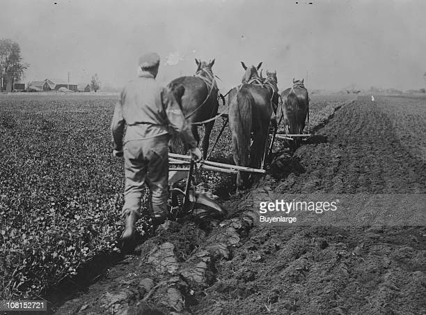 A farmer employing crop rotation plows under red clover a cover crop in the process of planting corn ca 1920s