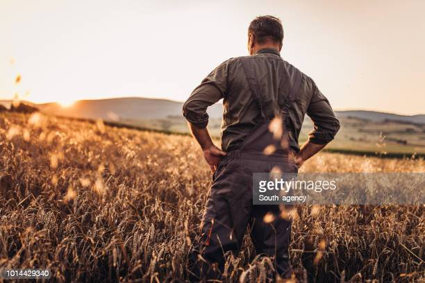 farmer enjoying in sunset - rancher stock pictures, royalty-free photos & images