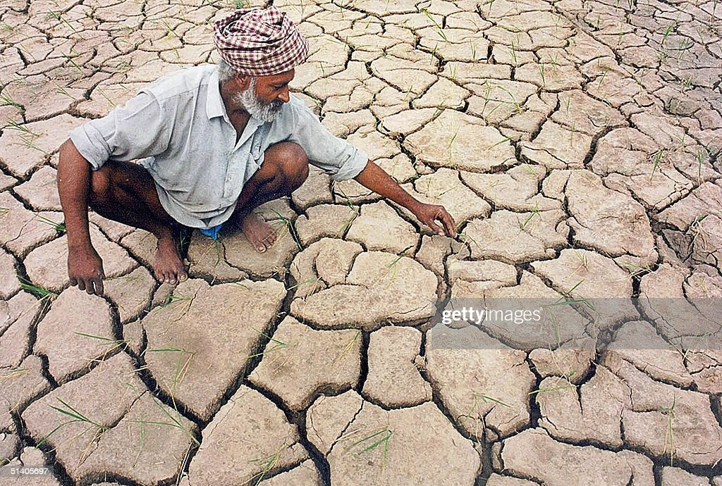 A farmer examine part of his parched field near Chandigarh 25 July 2002 Around 320 of the 524 districts of India have been hit by the drought...